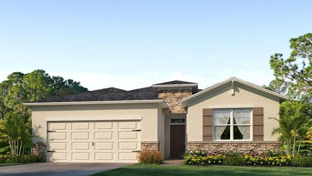 32825 Sand Creek Drive, Wesley Chapel, FL 33543 (MLS #T3167843) :: Cartwright Realty
