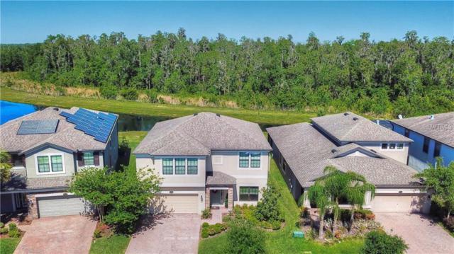 19544 Whispering Brook Drive, Tampa, FL 33647 (MLS #T3169459) :: Dalton Wade Real Estate Group