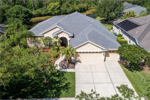 10261 Shadow Branch Drive, Tampa, FL 33647 (MLS #T3169968) :: Team Bohannon Keller Williams, Tampa Properties