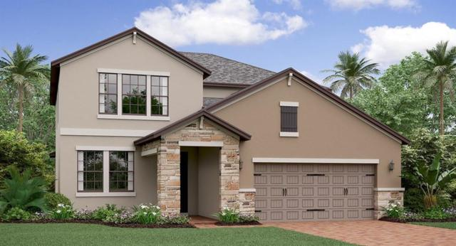 6222 English Hollow Road, Tampa, FL 33647 (MLS #T3171438) :: The Duncan Duo Team