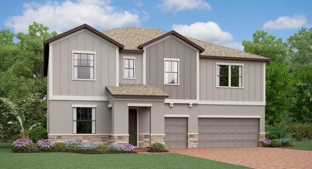11711 Navajo Sandstone Street, Riverview, FL 33579 (MLS #T3172311) :: Medway Realty