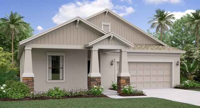 11464 Freshwater Ridge Drive, Riverview, FL 33579 (MLS #T3173192) :: The Duncan Duo Team