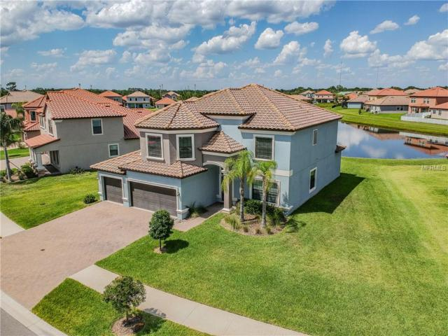 11916 Sand Myrtle Road, Riverview, FL 33579 (MLS #T3174421) :: The Duncan Duo Team