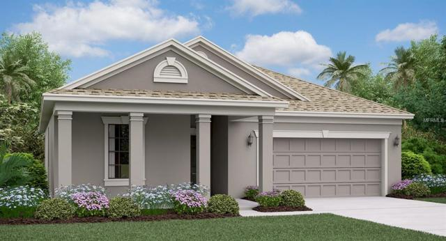 11421 Chilly Water Court, Riverview, FL 33579 (MLS #T3176218) :: The Duncan Duo Team