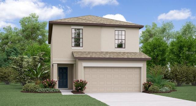 7420 French Marigold Avenue, Tampa, FL 33619 (MLS #T3176615) :: The Duncan Duo Team