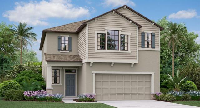 9019 Shadyside Lane, Land O Lakes, FL 34637 (MLS #T3179923) :: Team 54