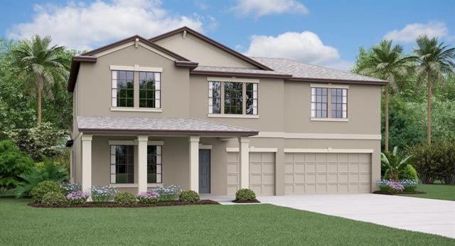 6377 Cobble Bliss Street, Zephyrhills, FL 33541 (MLS #T3185047) :: Rabell Realty Group