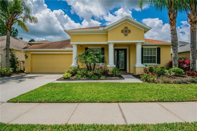 27136 Firebush Drive, Wesley Chapel, FL 33544 (MLS #T3185493) :: Lovitch Realty Group, LLC