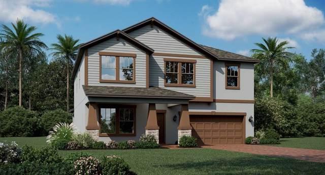 1740 Black Maple Place, Ocoee, FL 34761 (MLS #T3198067) :: Rabell Realty Group