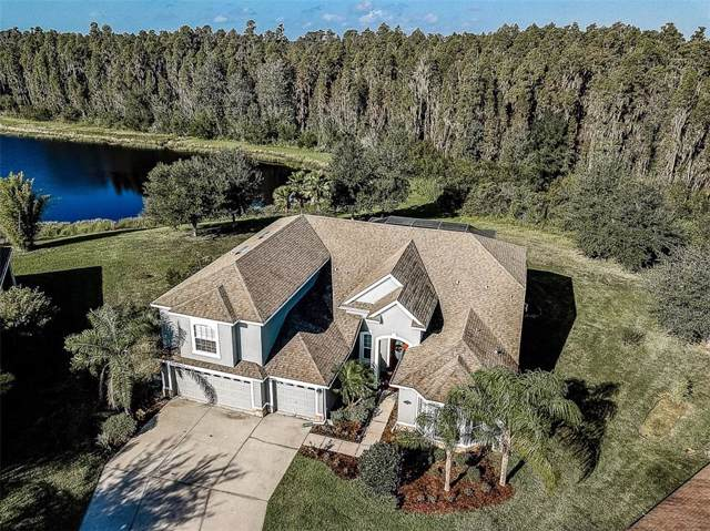 19320 Yellow Clover Drive, Tampa, FL 33647 (MLS #T3201537) :: Bustamante Real Estate