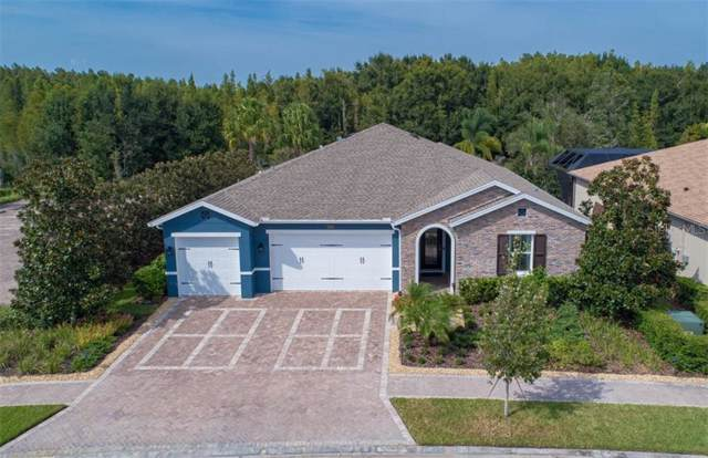31321 Driscoll Drive, Wesley Chapel, FL 33543 (MLS #T3203540) :: Team Bohannon Keller Williams, Tampa Properties