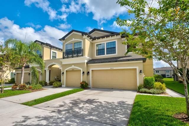 11633 Crowned Sparrow Lane, Tampa, FL 33626 (MLS #T3211379) :: 54 Realty