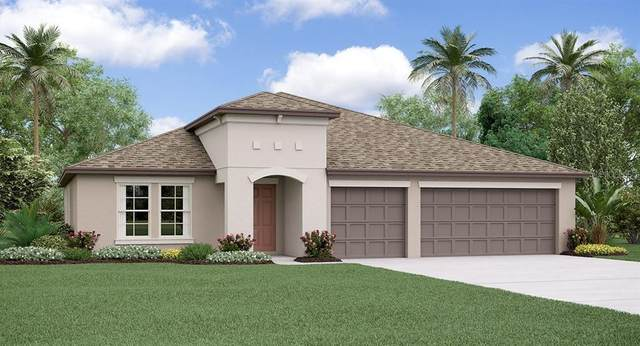 10825 Crushed Grape Drive, Riverview, FL 33578 (MLS #T3225535) :: EXIT King Realty