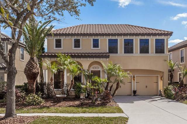 20349 Chestnut Grove Drive, Tampa, FL 33647 (MLS #T3225729) :: Cartwright Realty