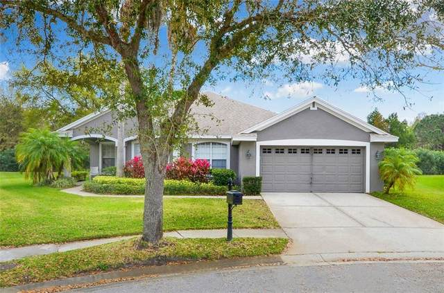 10501 Rochester Way, Tampa, FL 33626 (MLS #T3226894) :: Baird Realty Group