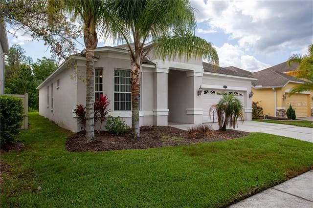 20223 Still Wind Drive, Tampa, FL 33647 (MLS #T3234255) :: Dalton Wade Real Estate Group