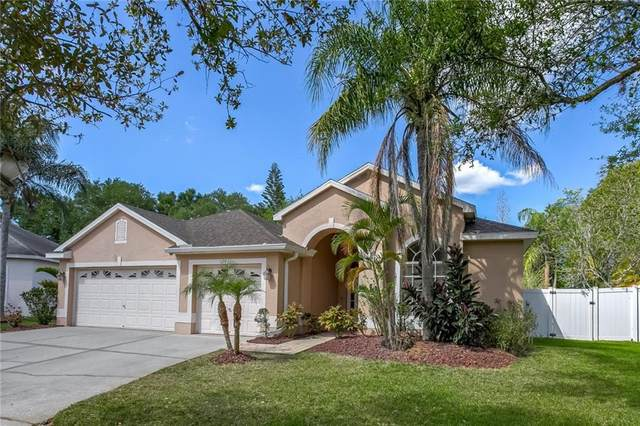 12031 Mountbatten Drive, Tampa, FL 33626 (MLS #T3235279) :: Cartwright Realty