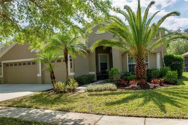 20414 Walnut Grove Lane, Tampa, FL 33647 (MLS #T3238977) :: Cartwright Realty