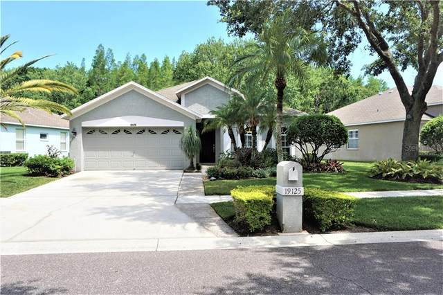 19125 Chemille Drive, Lutz, FL 33558 (MLS #T3244020) :: Griffin Group