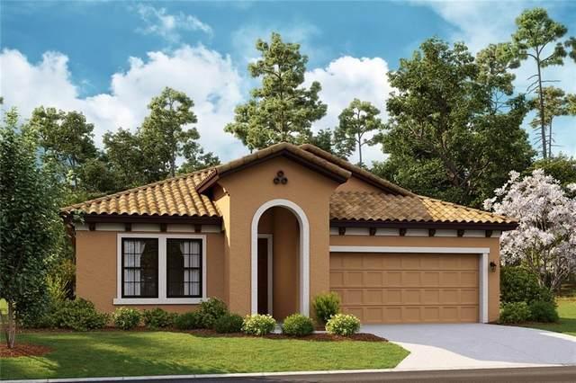 13609 Osprey Fern Lane, Lithia, FL 33547 (MLS #T3244091) :: Homepride Realty Services