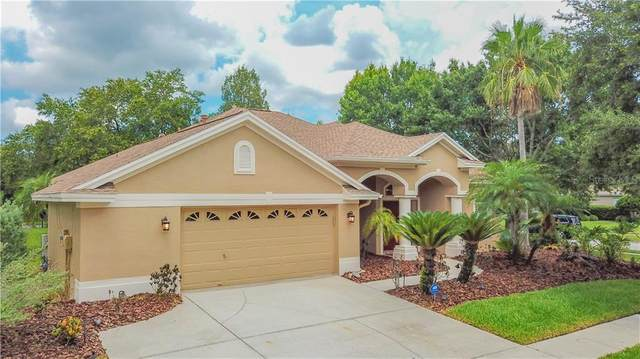 10354 Abbotsford Drive, Tampa, FL 33626 (MLS #T3245350) :: Griffin Group