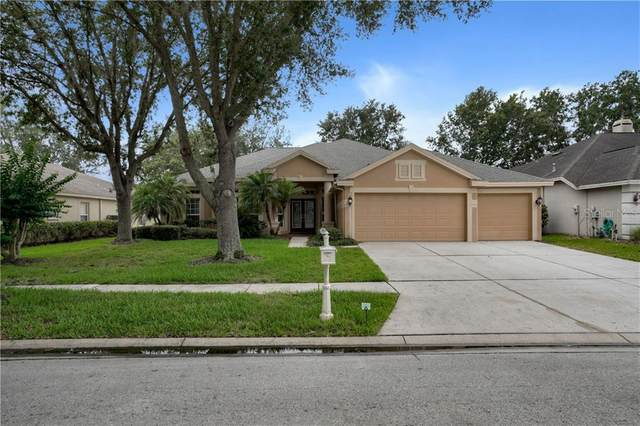 10233 Shadow Branch Drive, Tampa, FL 33647 (MLS #T3247400) :: Cartwright Realty