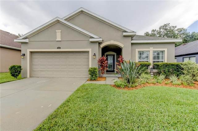 3618 Grecko Drive, Wesley Chapel, FL 33543 (MLS #T3251942) :: Griffin Group