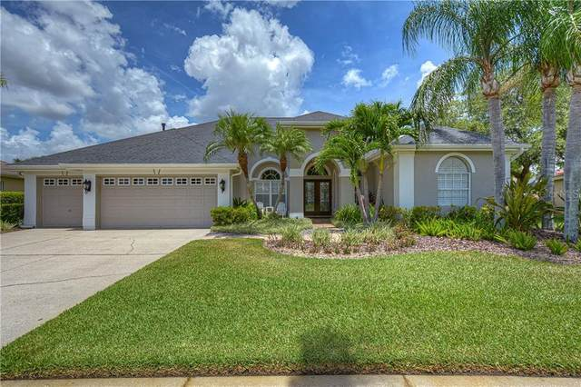 12107 Clear Harbor Drive, Tampa, FL 33626 (MLS #T3252384) :: Medway Realty