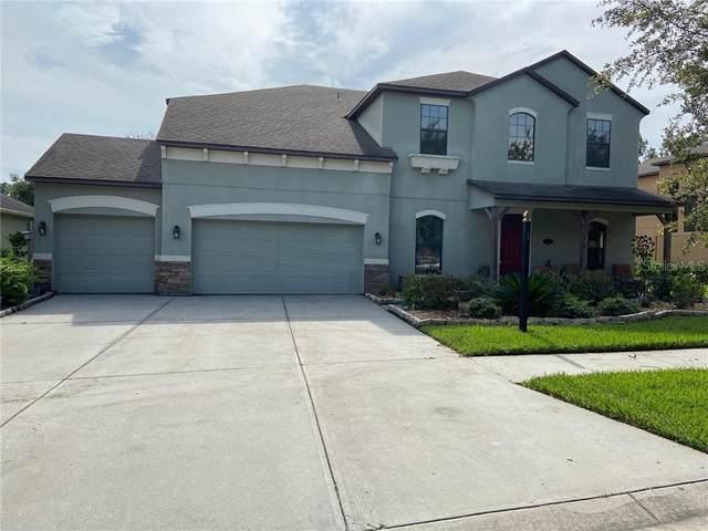19205 Climbing Aster Drive, Tampa, FL 33647 (MLS #T3253181) :: Dalton Wade Real Estate Group