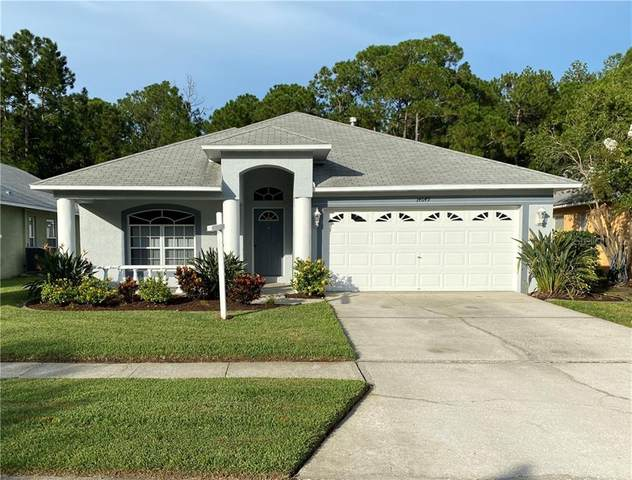 14649 Corkwood Drive, Tampa, FL 33626 (MLS #T3256280) :: Team Bohannon Keller Williams, Tampa Properties