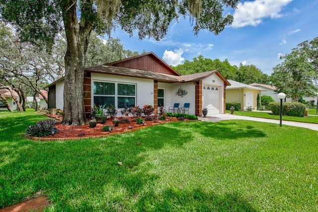 11515 Scotch Pine Drive, New Port Richey, FL 34654 (MLS #T3256350) :: MavRealty