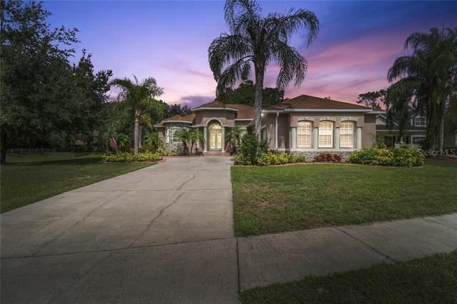 3501 Holland Drive, Brandon, FL 33511 (MLS #T3257579) :: Dalton Wade Real Estate Group