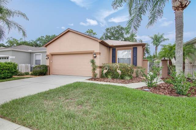 20950 Tangor Road, Land O Lakes, FL 34637 (MLS #T3258078) :: Gate Arty & the Group - Keller Williams Realty Smart