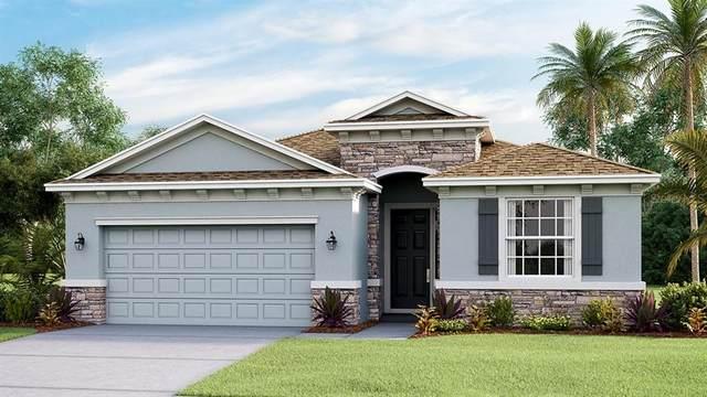8024 Praise Drive, Tampa, FL 33625 (MLS #T3263595) :: Cartwright Realty