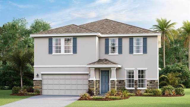 8026 Praise Drive, Tampa, FL 33625 (MLS #T3263597) :: Cartwright Realty