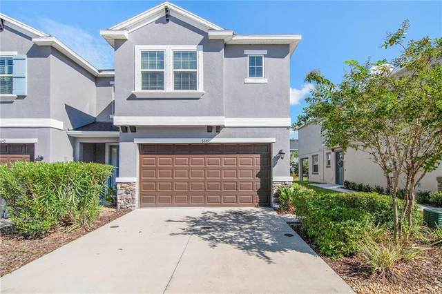 6641 Rocky Park Street, Tampa, FL 33625 (MLS #T3266627) :: BuySellLiveFlorida.com