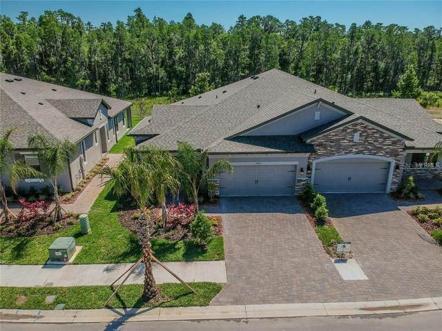 19343 Hawk Valley Drive, Tampa, FL 33647 (MLS #T3267819) :: Dalton Wade Real Estate Group