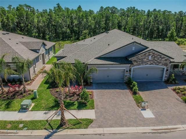 19350 Hawk Valley Drive, Tampa, FL 33647 (MLS #T3267820) :: Dalton Wade Real Estate Group