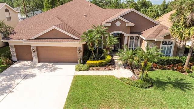 10563 Greencrest Drive, Tampa, FL 33626 (MLS #T3270459) :: The Duncan Duo Team