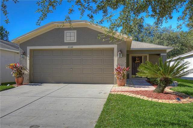 18160 Canal Pointe Street, Tampa, FL 33647 (MLS #T3278062) :: Realty One Group Skyline / The Rose Team