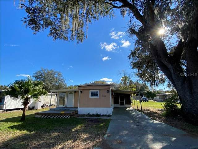 35018 Sateen Drive, Zephyrhills, FL 33541 (MLS #T3283380) :: Griffin Group
