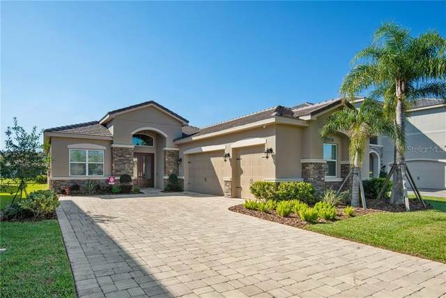 31176 Chesapeake Bay Drive, Wesley Chapel, FL 33543 (MLS #T3291744) :: Griffin Group