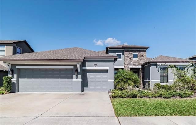 10628 Mistflower Lane, Tampa, FL 33647 (MLS #T3292578) :: Everlane Realty