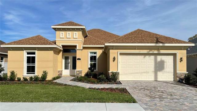 15417 Otto Road, Tampa, FL 33624 (MLS #T3294055) :: The Duncan Duo Team