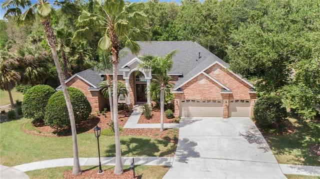 10104 Radcliffe Drive, Tampa, FL 33626 (MLS #T3298303) :: The Duncan Duo Team