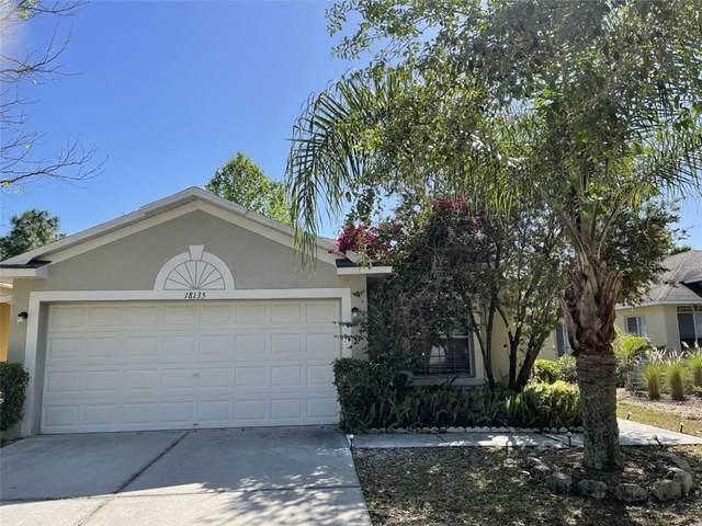 18135 Portside Street, Tampa, FL 33647 (MLS #T3299869) :: Team Bohannon Keller Williams, Tampa Properties