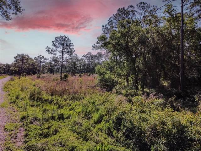 14805 Berkford Avenue, Tampa, FL 33625 (MLS #T3303345) :: Armel Real Estate