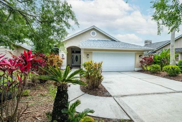 15806 Dawson Ridge Drive, Tampa, FL 33647 (MLS #T3303412) :: Team Borham at Keller Williams Realty