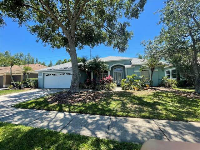 12402 Seabrook Drive, Tampa, FL 33626 (MLS #T3305897) :: The Duncan Duo Team