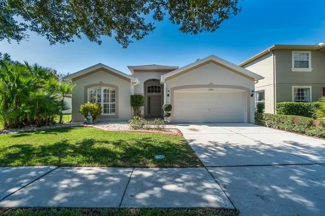 19126 Meadow Pine Drive, Tampa, FL 33647 (MLS #T3306375) :: Team Borham at Keller Williams Realty